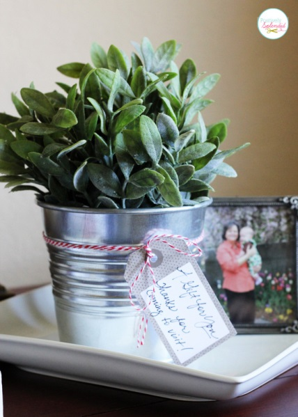 Potted plant with photo frame