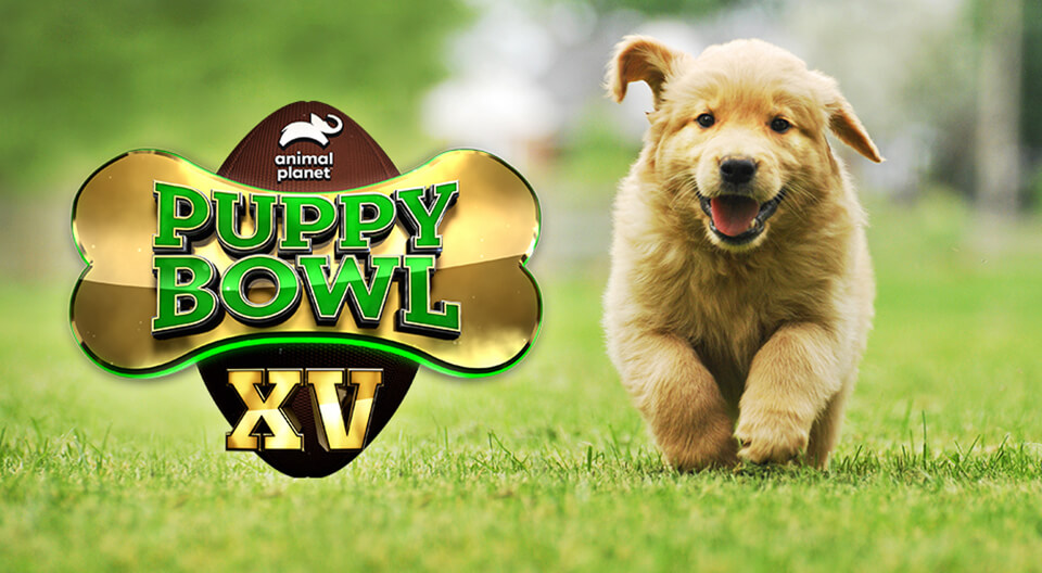 Puppy Bowl XV is Coming