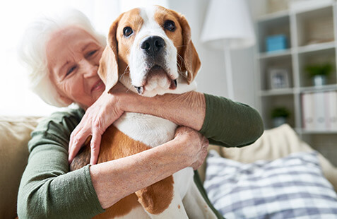 Saving Seniors: 5 Reasons to Adopt a Pet in Its Golden Years