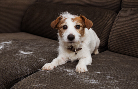 How to Keep Pet Hair Under Control