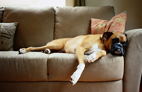 New Study Finds Four Scents That Can Relax Dogs