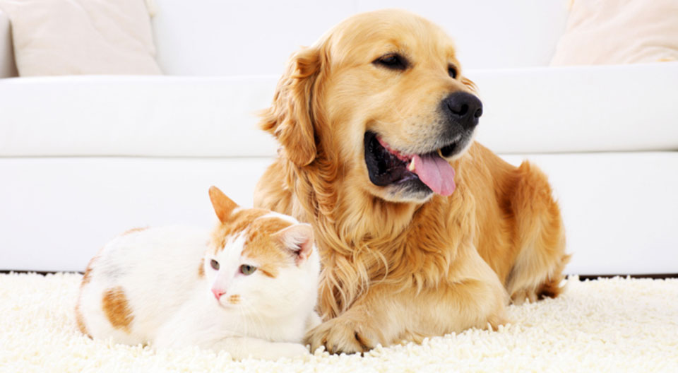 Cleaning Tips For Pet Parents