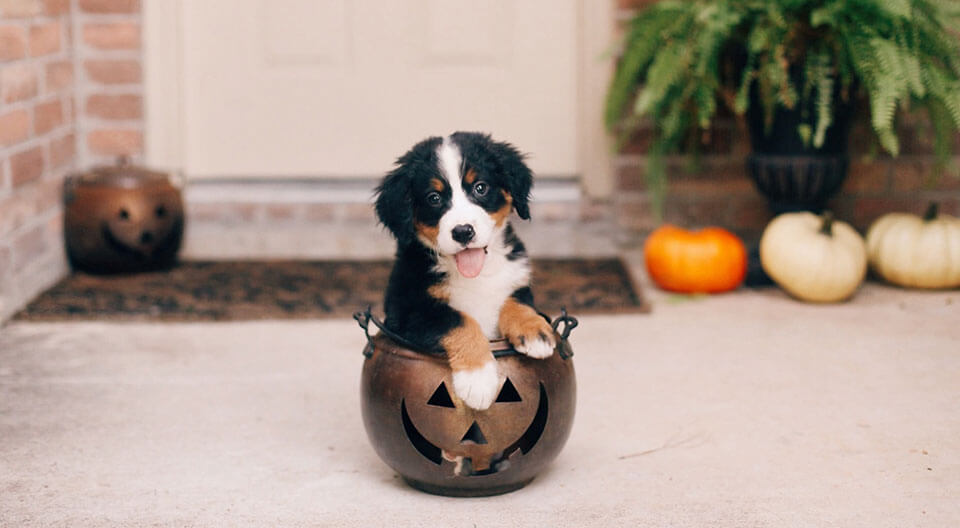 Pawsibly the Best Halloween Pet Costumes