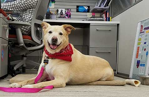 Take Your Dog to Work (Every) Day at BISSELL Headquarters