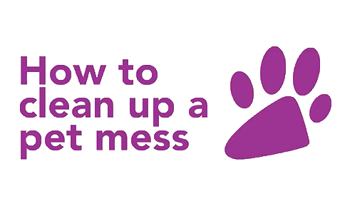 How to Clean Up a Pet Mess