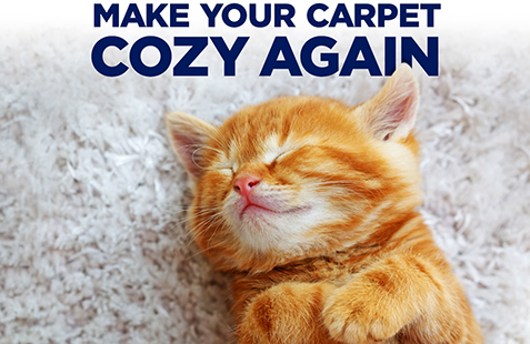 Make Your Carpet Cozy Again