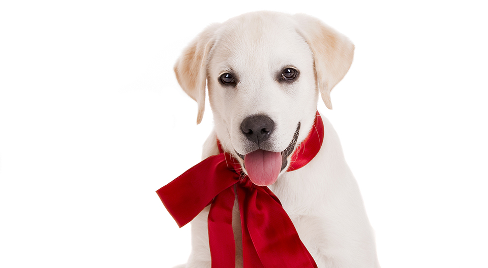 Pets Do Not Make Good Presents