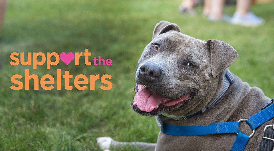 Support the Shelters Sweepstakes Gives Back