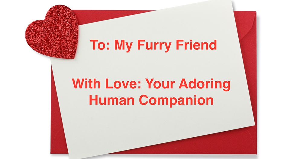 Spoil Your Pet this Valentine's Day